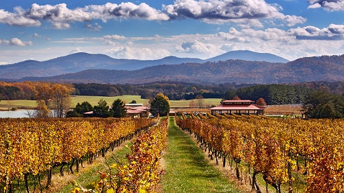 Autumnal Cabernet Sauvignon above the winery and tasting room of Afton Mountain Vineyards. Afton, Virginia, USA. [Monticello AVA]